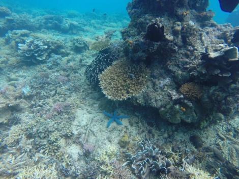 blue starfish were everywhere