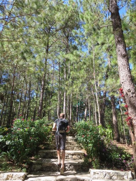 historical walking trail...pine trees!