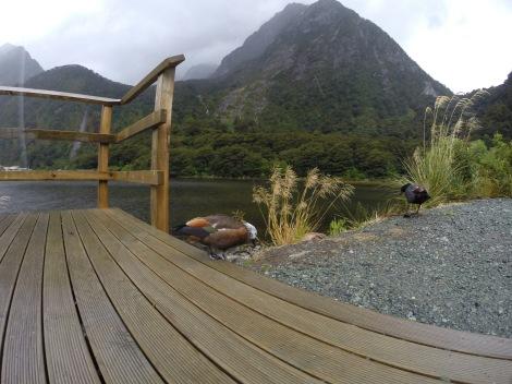 the ducks didn't seem to mind the rain