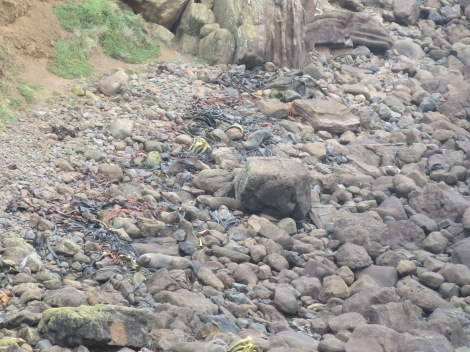 can you see the seals on the rocks?