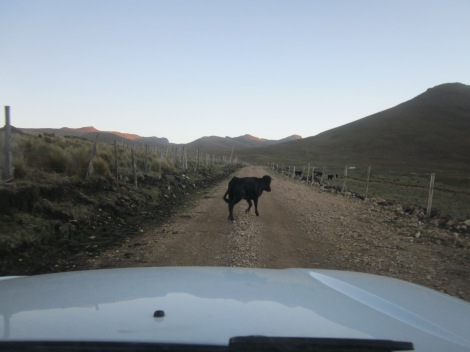we drove through an area where fighting bulls are raised...this particular bull didn't want to get out of our way