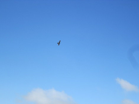 watching an eagle soar above us