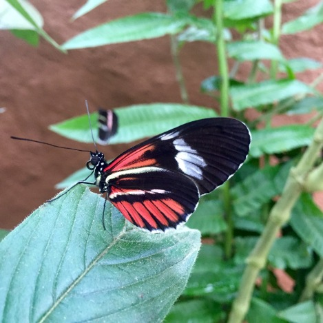 at the butterfly farm