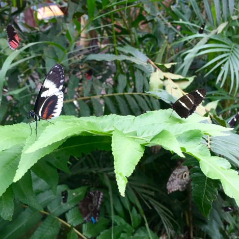 so many butterflies
