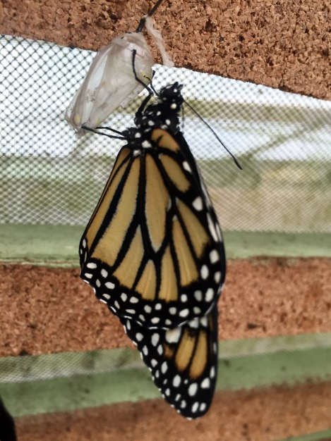 there was an area where you could watch butterflies hatch out of their cocoons