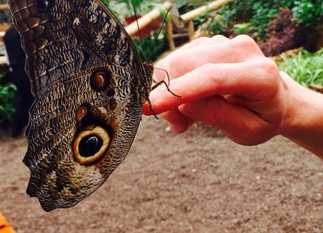 "holding an ""owl butterfly"""