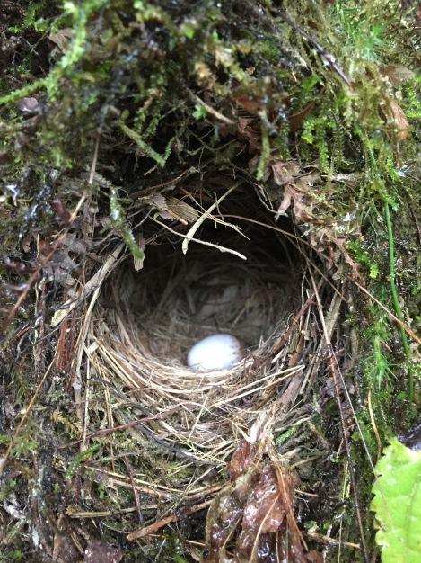 cute little bird nest