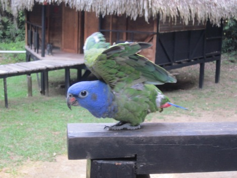 resident parrot adopted by the lodge